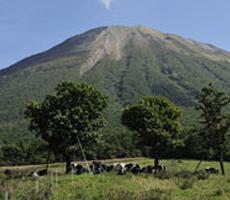 大山グリーン